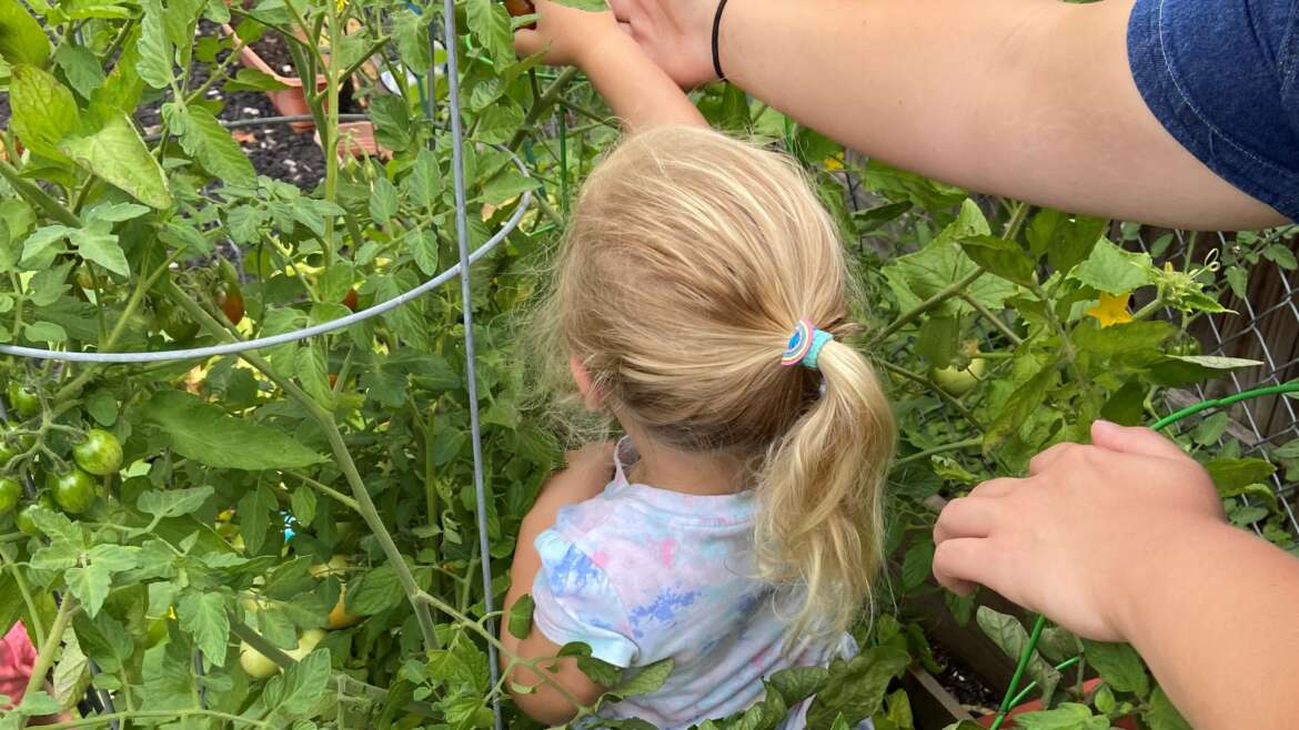 3 Fun Farming Activities You Can Do Right At Home!